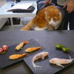 diadiemanuong-com-no-mat-voi-mon-sushi-hinh-con-ca7f900b60635853428984496570